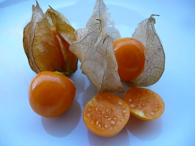 physalis cancer