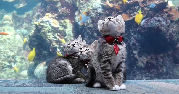 chatons et chiots25