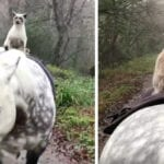 Un chat sur un cheval